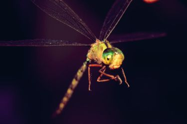 Dragonfly Flies by fayellow