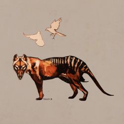 Thylacine by DiegoRobredo