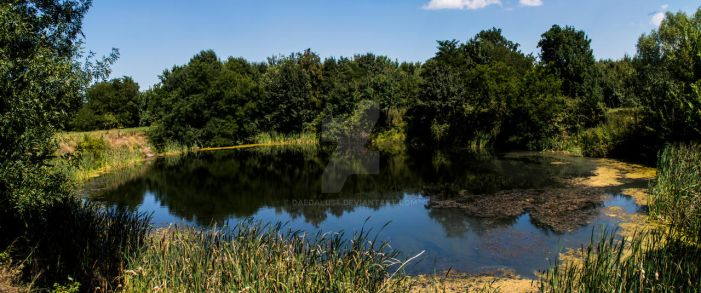 Pond by daedalus4