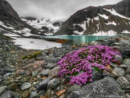 Flower Platter by IvanAndreevich