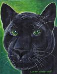 Black panther by Lunar-White-Wolf