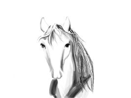 SKETCH A HORSE by betweet