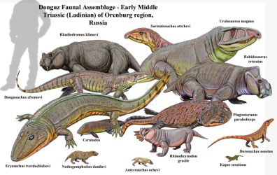 Donguz Middle Triassic Fauna by DiBgd