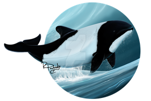 Commersons Dolphin by SyKoticOrKa