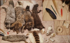 Taxidermy Collection by ratatouiIIe