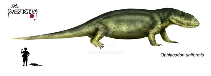 Ophiacodon uniformis by Theropsida