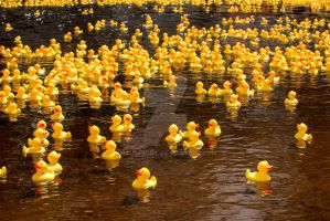 Rubber Ducks by MauserGirl