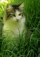 In the Grass by Paranoid-Duckkie