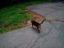 Cat Walking by ManixTT-stock