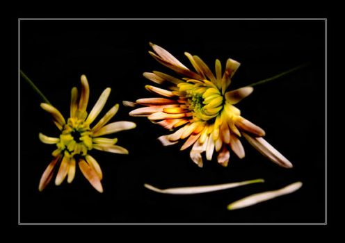 Flower by newcastlemale