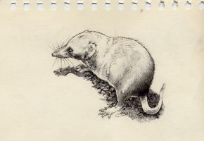 Shrew by Weaslet