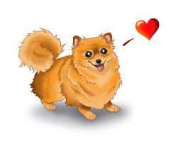 Pomeranian Love by Fireberd904