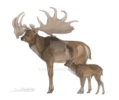 Fallow deer and Megaloceros