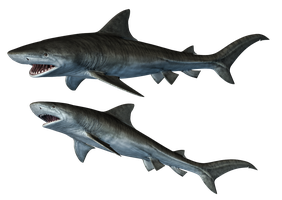 Sharks-1 PNG Stock by Roy3D