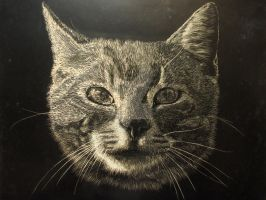 Cat on scratchboard by Rathsi