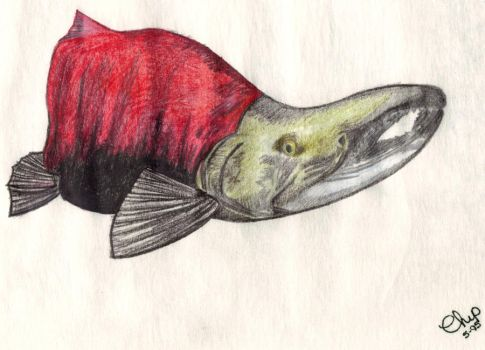 Red Salmon by BENNYCUB