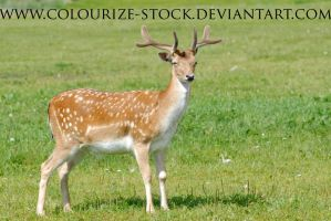 Deer Stock 1 by Colourize-Stock