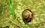 snail 6 widescreen wp by blackasmodeus