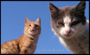 465 by evy-and-cats