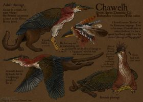 Chawelh Reference Sheet by Ciameth
