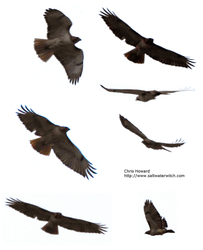 Hawk and eagle stock by the0phrastus
