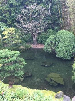 Japanese garden pt 1 by sailorwonky