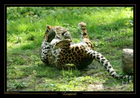 Leopard 1 by caracal