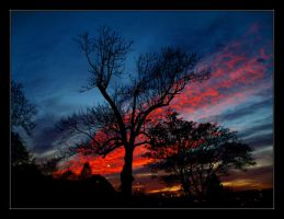 Under A Burning Tree by AdrianOlczyk