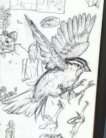 bird sketch by thecarrierone