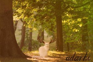 Creatures of the Forest by Adarhi