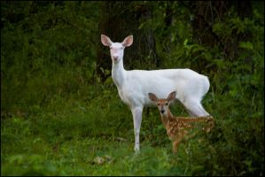 Albino and Fawn by bamako