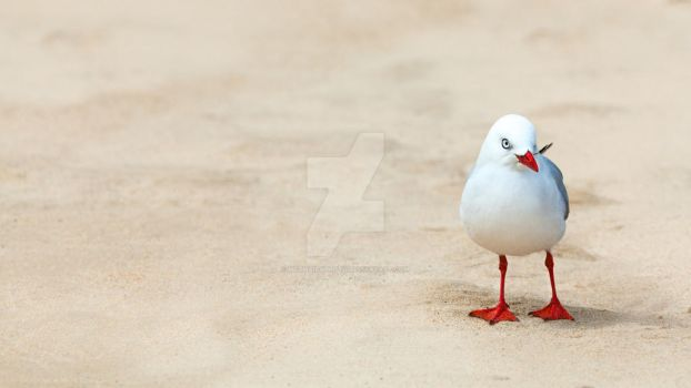 Seagull by MotHaiBaPhoto