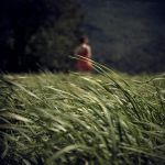 Hay and Grass by SebastienTabuteaud