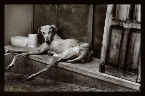 Galgo by JesusArting