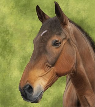Digital Horse Painting #1 by Satrumm