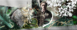 Draco by VaLeNtInE-DeViAnT