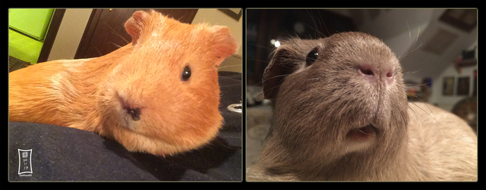 New Piggies by Siobhan68