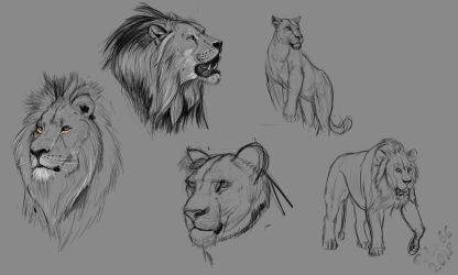 Lion Studies Compilation March2018 by petro66