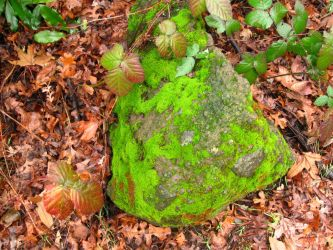 Moss and Ivy rock by Eris-stock