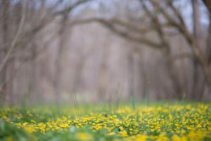 Fairytale Forest Background by little-spacey