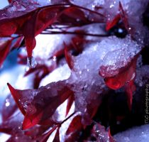 Snowy ice drops by TlCphotography730
