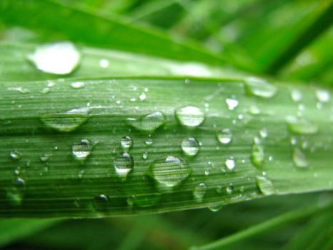 Beads of Water on a Leaf by StephenPB