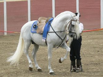 Andalusian by wakedeadman