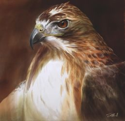 Red-Tailed Hawk Oil Painting by stevegoad