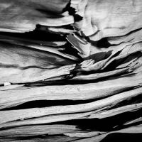 Driftwood Detail by dynax700si