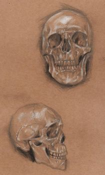 practise skulls by bechahns