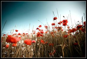 Poppy Field II by 2-m