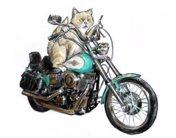 Motorcycle Cat by LinaLightning
