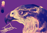 Daily Sketch: Goshawk + SPEEDPAINT by ordinaryredtail