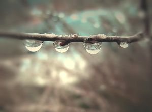 drops by hv1234
